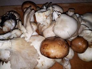 How To Make Mushroom Stew, mushroom stew recipe, chicken stew mushrooms, chicken mushroom stew, mushroom chicken stew, stewed mushrooms, mushroom stew